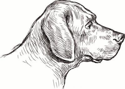 简笔画狗 可爱