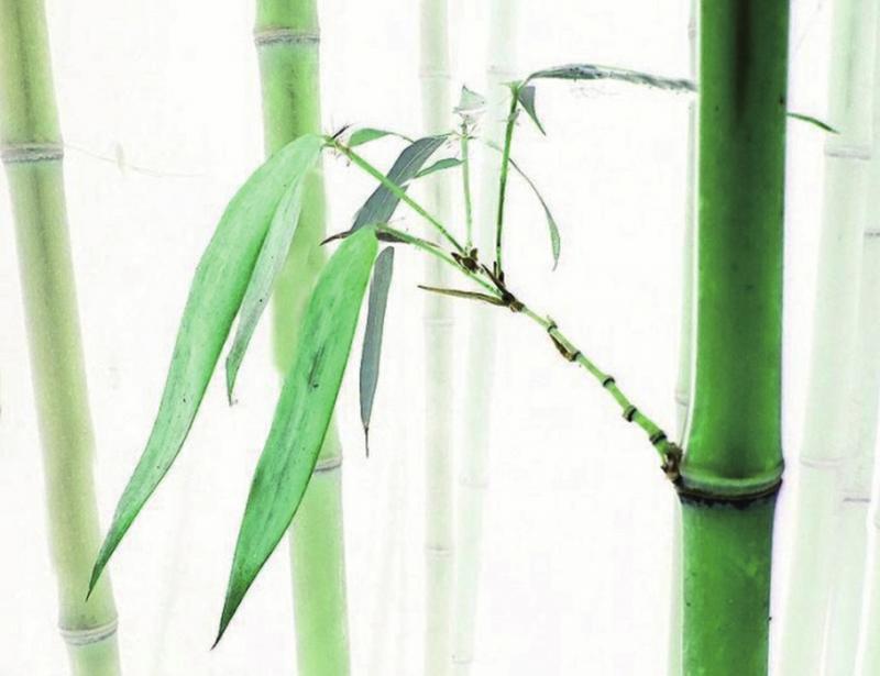 竹子乐器简笔画手绘