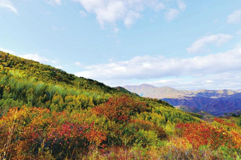 进入9月下旬,作为国家自然保护区的百花山,不同海拔的植物开始交替