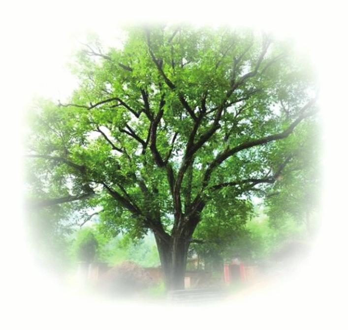 跳舞的树图片简笔画